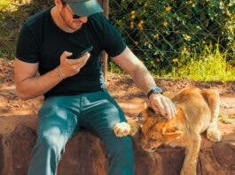 Captive Lion Breeding Poses Health Risks to Tourists and Others, Says Study