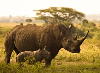 rhino-poachers-convicted-trials