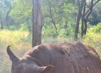 rhino-poaching-south-africa
