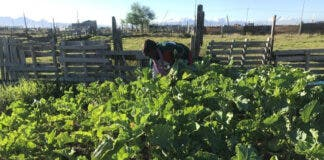 Jane Hozheri and her daughter started planting vegetables in Mfuleni, Cape Town after losing their business during the Covid-19 lockdown. Today, she says the vegetable garden is thriving, with plans to expand. Photo: Tariro Washinyira