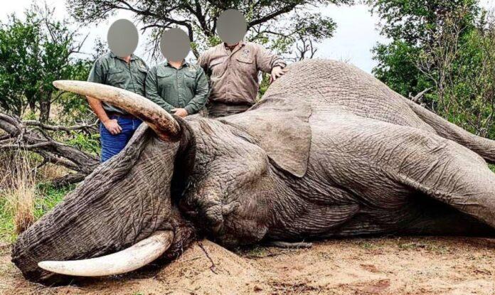 trophy hunting elephant wildlife