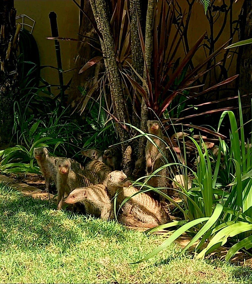 Mongoose owl rescue centre