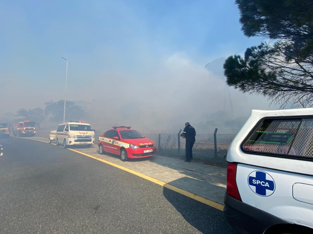 SPCA call to help animals cape town fire