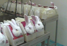 animal testing south africa