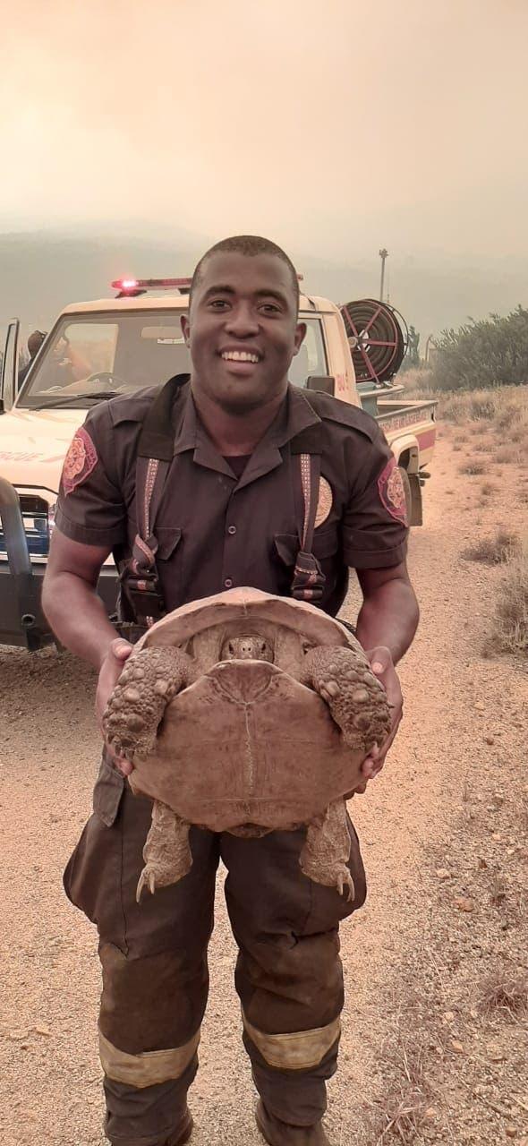 fireman save tortoise Helderberg