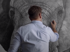 elephant pencil drawing david filer