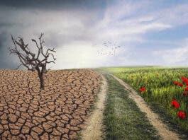 Stellenbosch University to Open School for Climate Studies