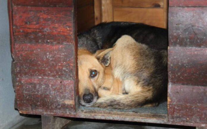 pet shelter flooded Khayelitsha