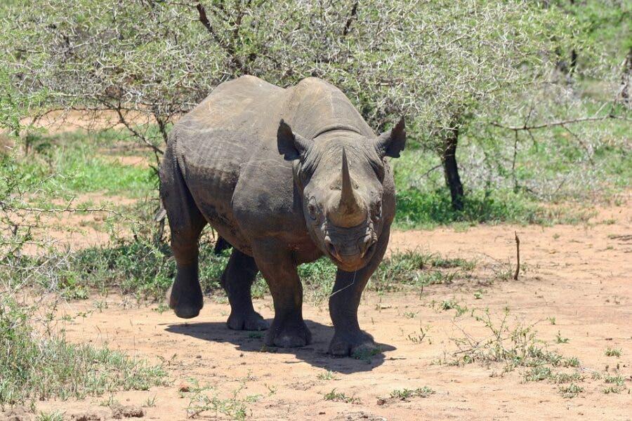 rhino attack south africa