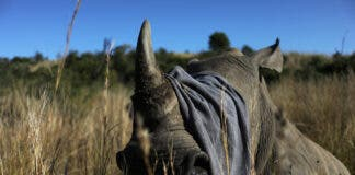 Rhino poachers return South Africa after lockdown