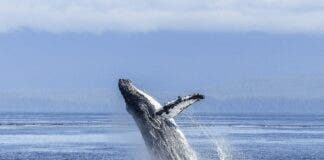 Algoa Bay in South Africa Becomes Prestigious Whale Heritage Site