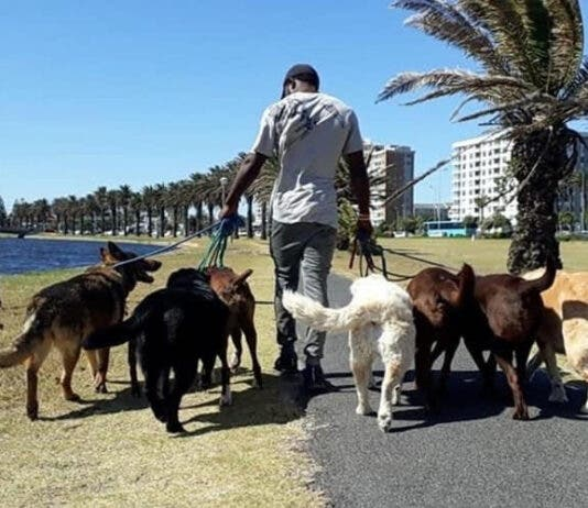 Kevin Ilunga Nkongolo walks dogs in Milnerton. Photos provided by Karen Louise Fletcher