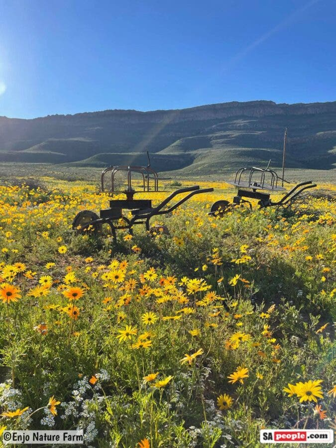 South Africa wild flowers Enjo Nature Farm 1