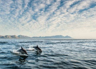 African Youth Summit Launched to Protect Oceans