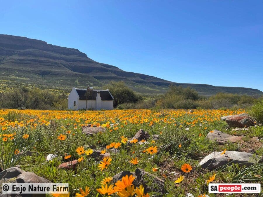 wild flowers south africa