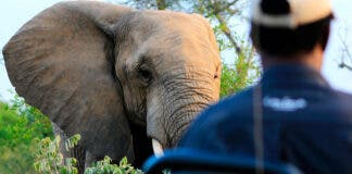Perfect Time to Go On Safari and Help Rebuild Brighter South African Tourism