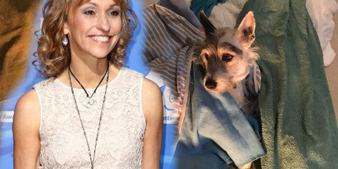 Dogs Poisoned by Crystal Meth in Cape Town, Reveals UK Celebrity Michaela Strachan