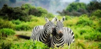 12 National Parks in South Africa go Cash-Free from September