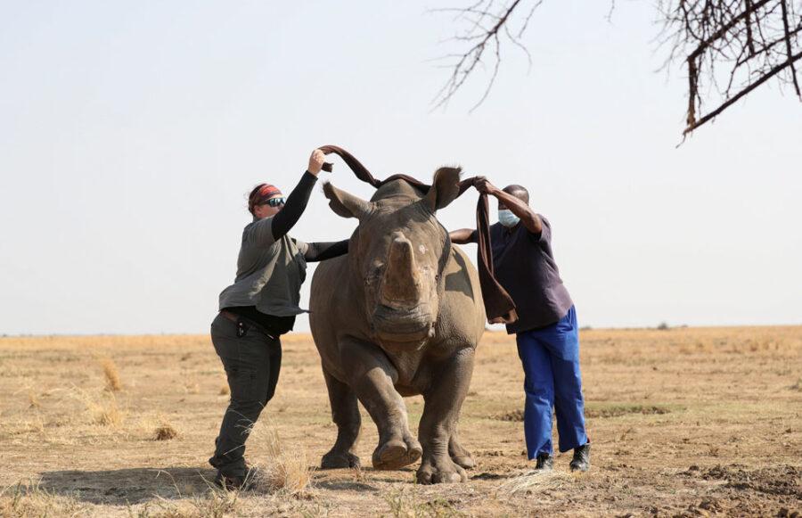 rhino poaching in south africa