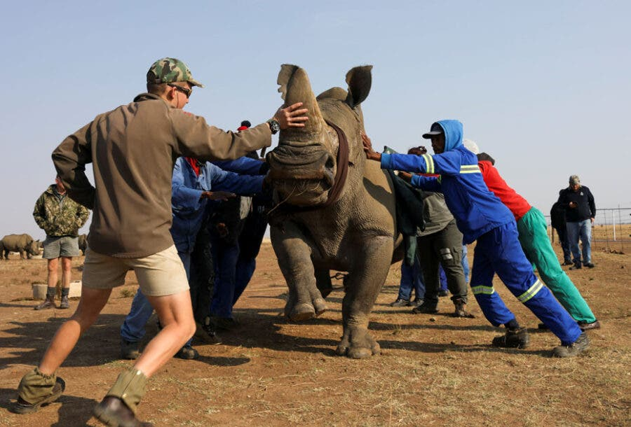 protect rhino from poaching