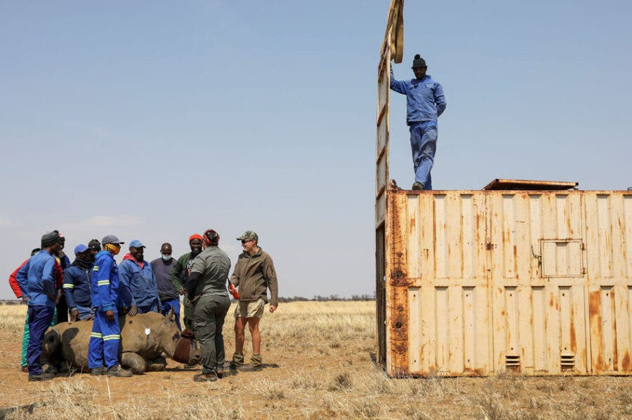 rhino ranch South Africa protect rhino