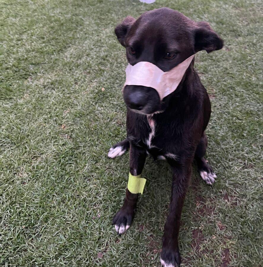 SPCA dog Kei saves benoni family