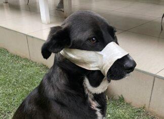 Kei hero dog benoni SPCA heroism award