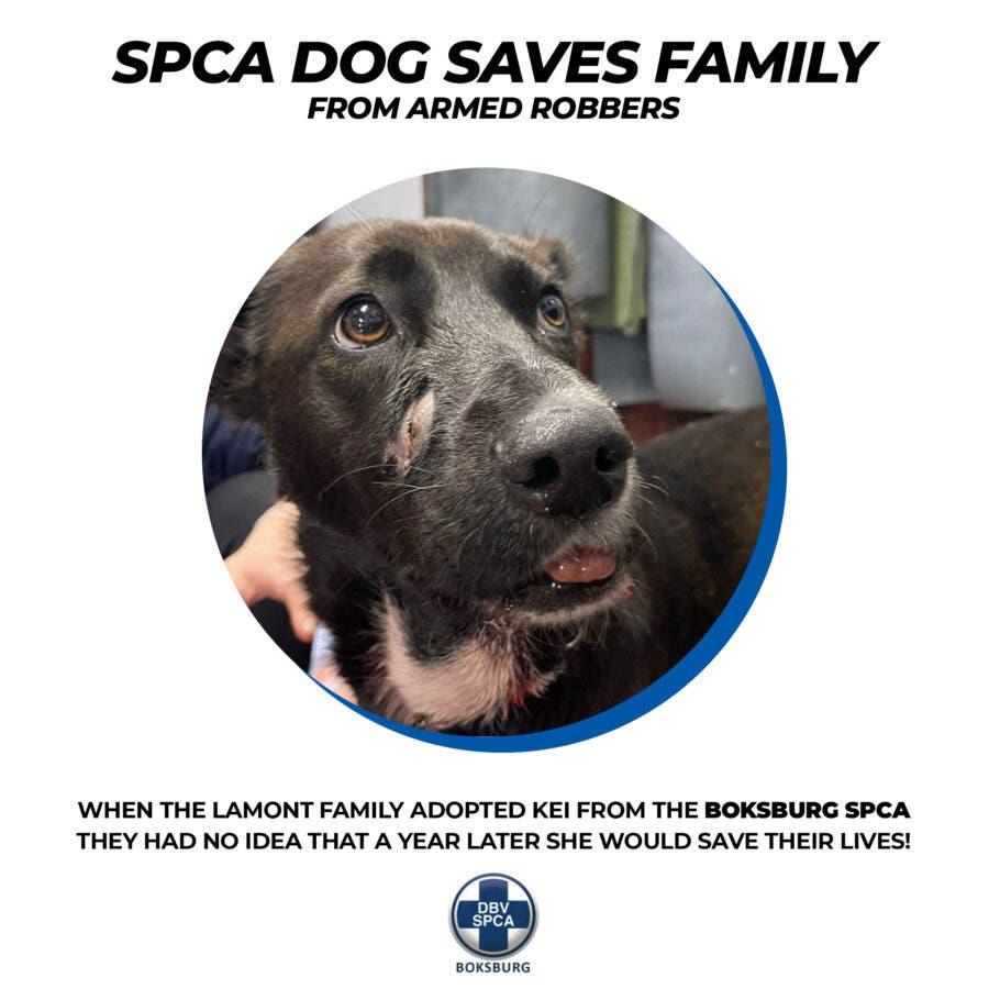 SPCA dog saves family