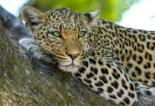 petition minister creecy wildlife south africa