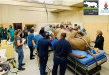 first-ever successful CT scan on a live rhino in South Africa.