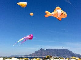 table-mountain-kites-south-africa-new-normal