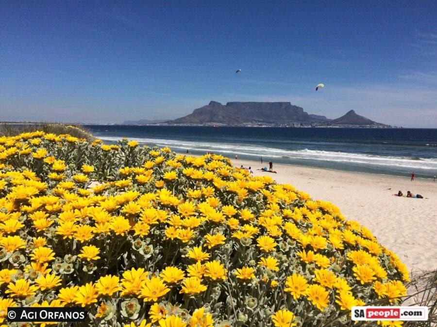 kite festival table mountain south africa