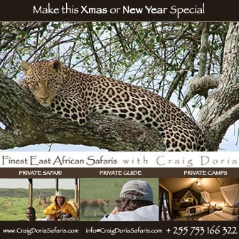 christmas-safari-ad-336jpg